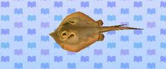 Ray (New Leaf crop)