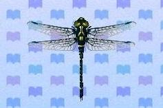 File:Petaltail dragonfly encyclopedia (New Leaf).jpg