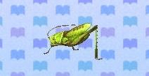 File:Grasshopper encyclopedia (New Leaf).jpg