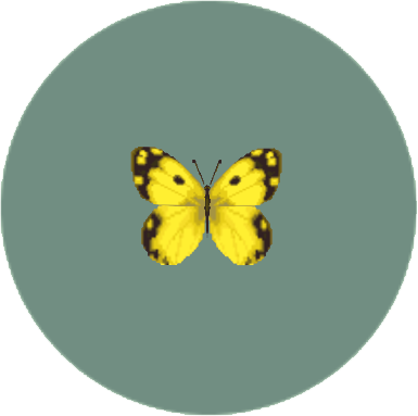 File:Yellow Butterfly (City Folk).png