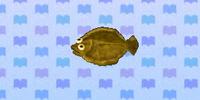 Olive flounder