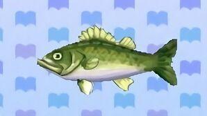 Sea bass encyclopedia (New Leaf)