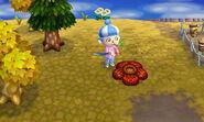 Rafflesia NewLeaf