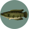 Giant Snakehead (City Folk)