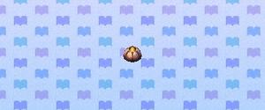 Acorn barnacle