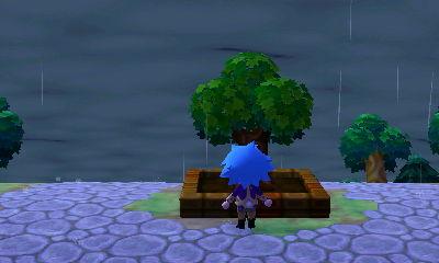 File:Plaza tree after 20 days.jpg