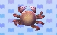 Horsehair crab encyclopedia (New Leaf)