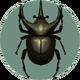 Atlas Beetle (City Folk)