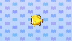 File:ButterflyfishNL.png