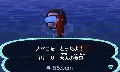File:Sea cucumber.jpg