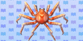 File:Giant Spider Crab.jpg