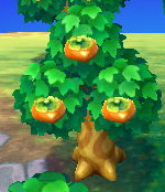 File:Persimmon tree.PNG