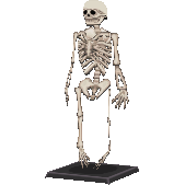 File:Skeletoncf.png