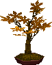 File:Maplegc.png