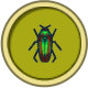 Jewel Beetle (City Folk)