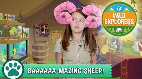 Wild Explorers - Baaaaaa-Mazing Sheep!