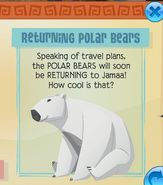 Returning polar bears