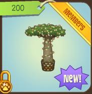 Shop Lit-Baobab-Tree 2010