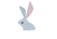 Bunny beta