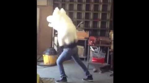 Discowolf.avi