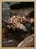 Coral Canyons Gila Monster