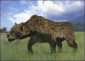 Dinofelis | Animal of the world Wiki | FANDOM powered by Wikia  Dinofelis | Ani...