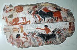 Egyptian Cattle