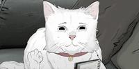 Phil (Cat)