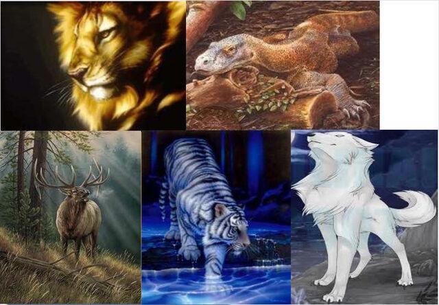 File:Animal combine.jpg
