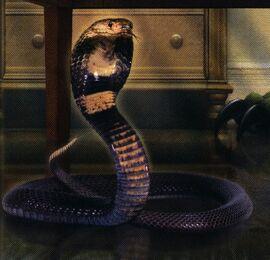 Cobra inside cover book 20