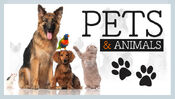 Pets and other animals 625x352