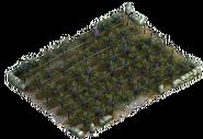 Vineyard (field)