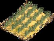 Sugar field