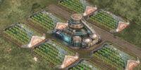 Sugar Beet Plantation