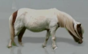 File:ZWee Pony.PNG