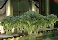 Broccoli minion