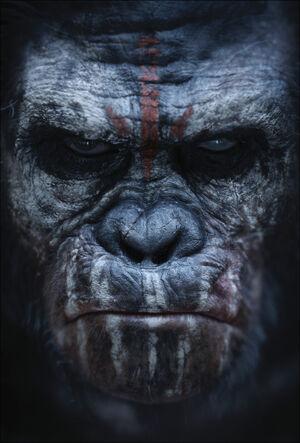 Koba poster