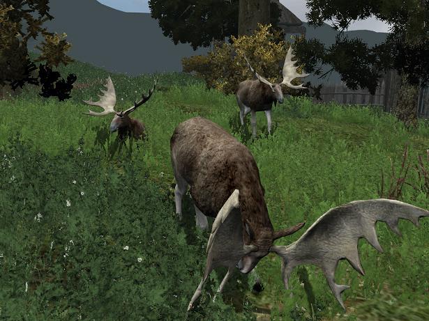 File:Elk.jpg