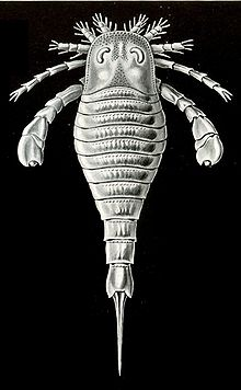 File:Eurypterus tetragonophthalmus illustration Haeckel 1904.jpg
