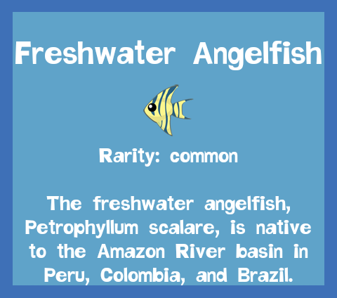 File:Fish2 Freshwater Angelfish.png