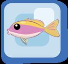File:Fish Yellowback Anthias.png