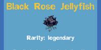 Black Rose Jellyfish