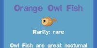Orange Owl Fish