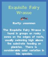Fish2 Exquisite Fairy Wrasse