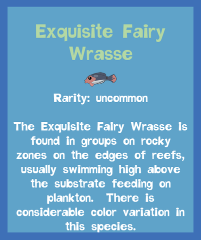File:Fish2 Exquisite Fairy Wrasse.png