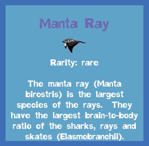 File:Fish2 Manta Ray.png