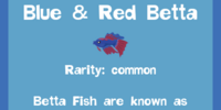 Blue & Red Betta