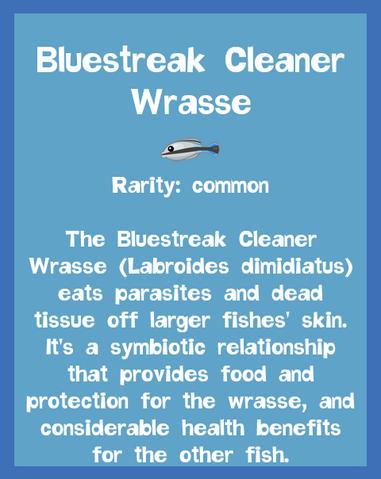 File:Fish2 Bluestreak Cleaner Wrasse.png