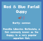 Fish2 Red & Blue Fantail Guppy