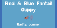Red & Blue Fantail Guppy